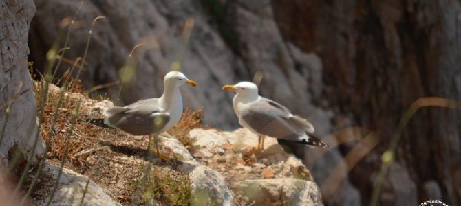 Excursión al Capo Caccia y Ledà d'Ittiri