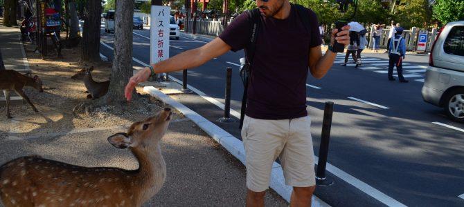Nara, la ciudad de los ciervos | Japón día 13